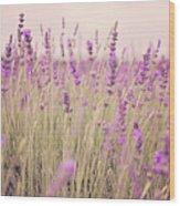 Lavender Blossom Wood Print