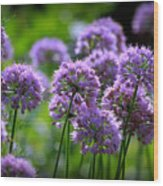 Lavender Breeze Wood Print