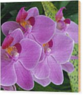 Lavender Colored Orchids Wood Print