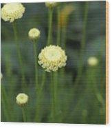 Lavender Cotton Wood Print