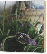 Lavender Energy Wood Print by Tara Miller