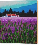 Lavender Field - County Wicklow - Ireland Wood Print