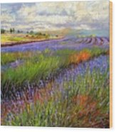 Lavender Field Wood Print by David Stribbling