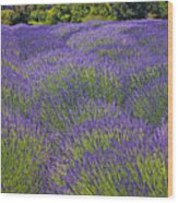 Lavender Field Wood Print by Garry Gay