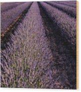Lavender Field Provence France Wood Print