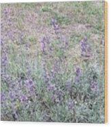 Lavender Fields Forever Wood Print
