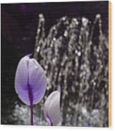 Lavender Flower At Fountain Wood Print