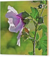 Lavender Flower In The Sun Wood Print