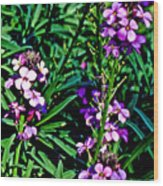 Verbena At Pilgrim Place In Claremont-california   Wood Print