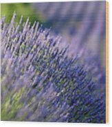 Lavender Flowers In A Field Wood Print