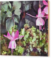 Lavender Fuchsias Just Hanging Around The Garden Wood Print