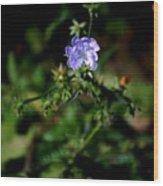 Lavender Hue Wood Print