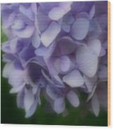 Lavender Hydrangea Wood Print