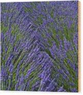Lavender In Sequim Wood Print