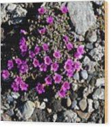 Lavender In The Rocks Wood Print