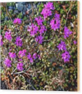 Lavender In The Wild Wood Print