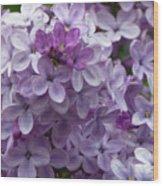 Lavender Lilacs Wood Print