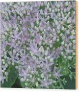 Lavender Lovelies Wood Print