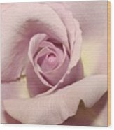 Lavender Mini Rose Wood Print