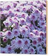 Lavender Mums Wood Print