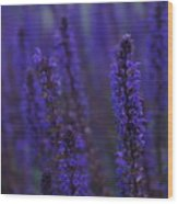 Lavender Night Wood Print