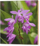 Lavender Orchid Wood Print