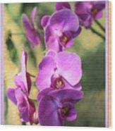 Lavender Orchids Wood Print