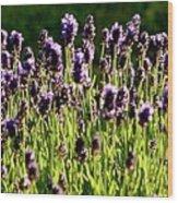 Lavender Pano Wood Print