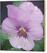 Lavender Pansy And Rain Wood Print by Eva Thomas