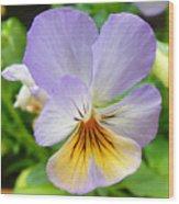 Lavender Pansy Wood Print