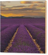 Lavender Provence Wood Print