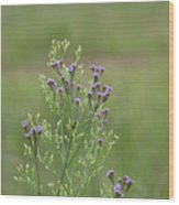Lavender Purple Verbena Wildflowers  Wood Print