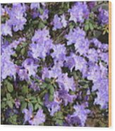 Lavender Rhododendrons Wood Print