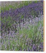 Lavender Sea Wood Print