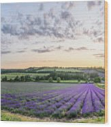 Lavender Sunset Panorama Wood Print