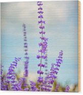 Lavender To The Sky Wood Print