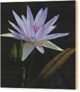 Lavender Tropical Water Lily Wood Print