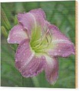 Lavender Vista - Daylily Wood Print