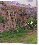 Lavender Wall In England Wood Print