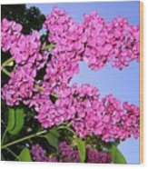 Lavish Lilacs Wood Print