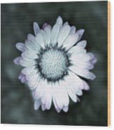 Lawn Daisy - Toned Wood Print