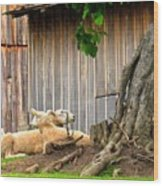 Lawnmowers At Rest Wood Print