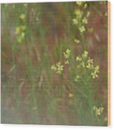Lay In The Meadow Wood Print