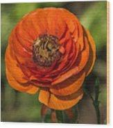 Layered Beauty Wood Print