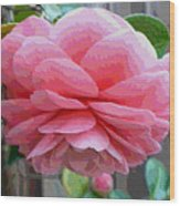 Layers Of Pink Camellia - Digital Art Wood Print