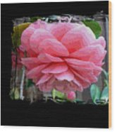 Layers Of Pink Camellia Dream Wood Print