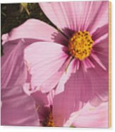 Layers Of Pink Cosmos Wood Print