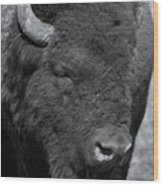 Lazy Buffalo Wood Print by Clinton Nelson