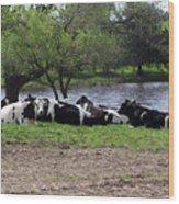 Lazy Cows Wood Print