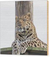 Lazy Leopard Wood Print